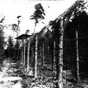 Zaun des Waldlagers